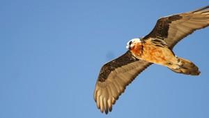 Himalayan birds [Bird Watching Holiday in Annapurna]